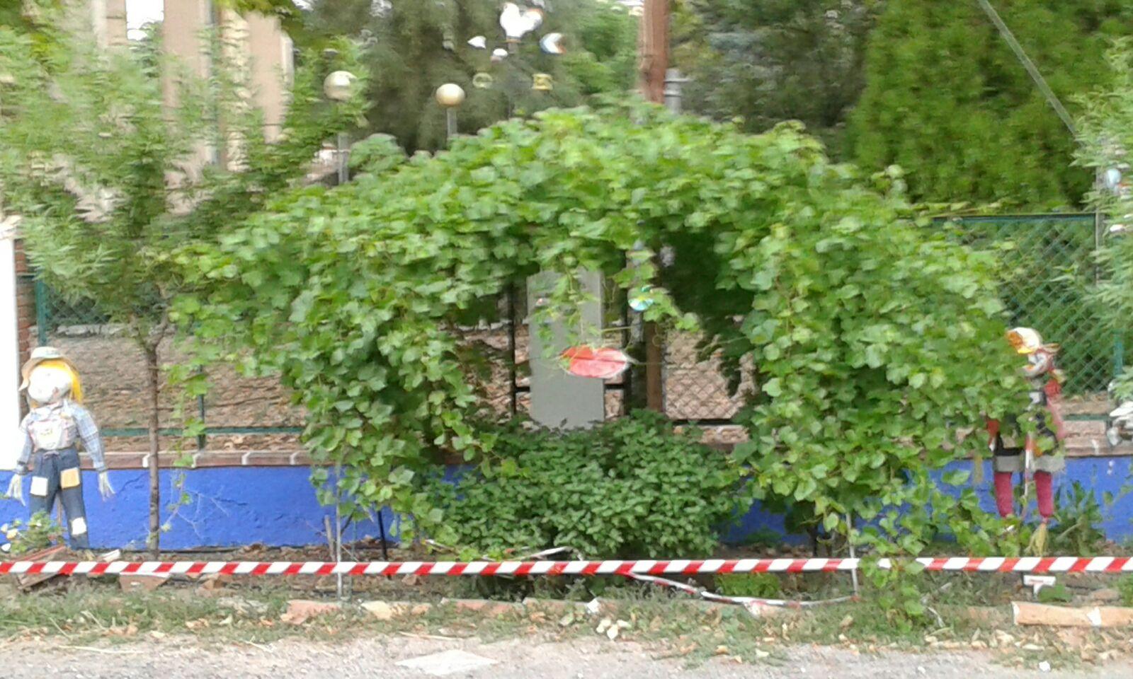 Nuestro huerto en verano ceip ngel andrade ciudad real for Ceip ciudad jardin